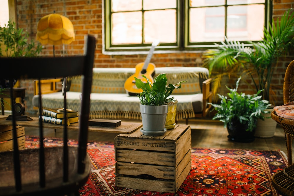 potted plants around a living room