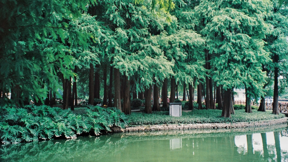 green-leafed trees near river