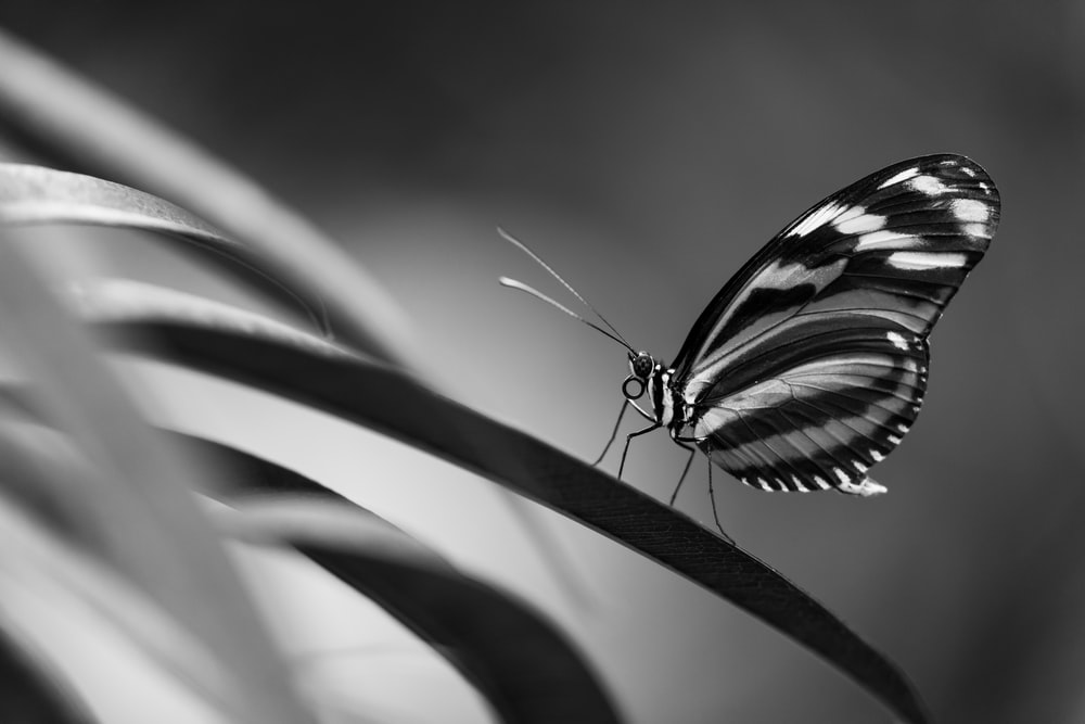 closeup photo of butterfly perching on plant