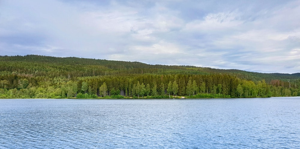 body of water and forest