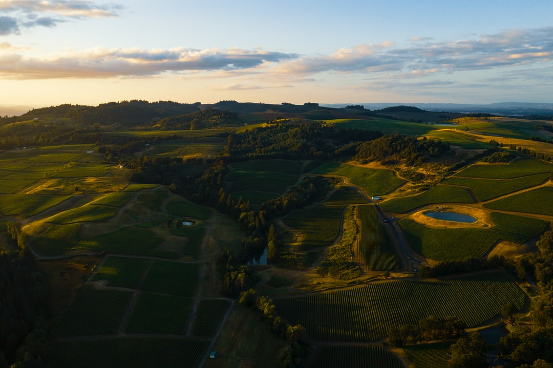 Wine lovers: This is your happy place. Wine country in the Willamette Valley in Oregon, at sunset. Whenever I fly my drone, I usually take a photo right after taking off and one right before landing. These are usually throw-away photos that simply help me remember exactly where I was at in case I want to go back. However, this shot of the vineyards scattered over those rolling fields was worthy of sharing.
