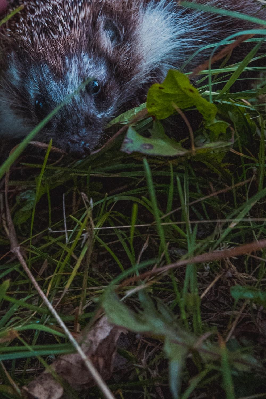 animal near leaf