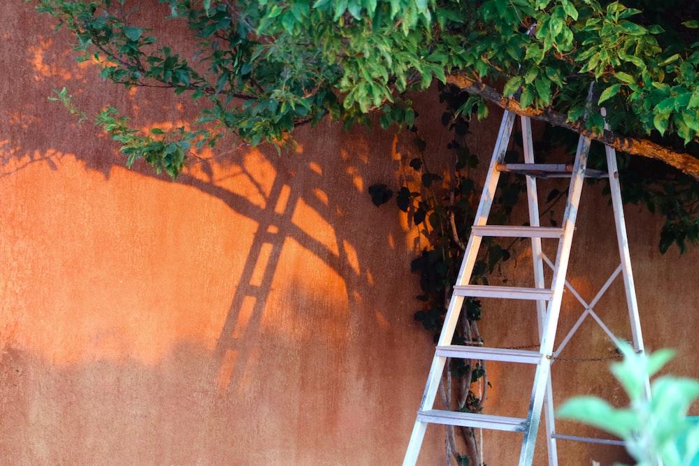 ladder under tree
