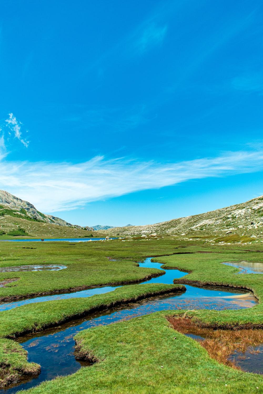 grasslands during daytime