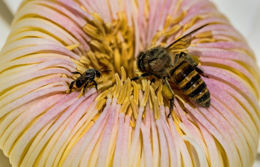 bee pollinating on flower