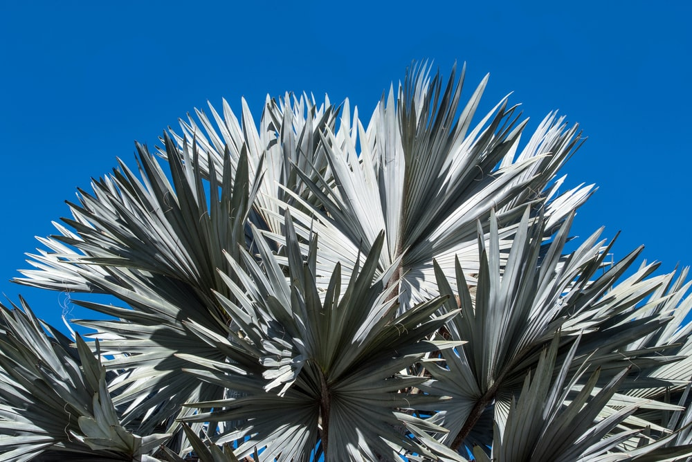 blue skies above plant