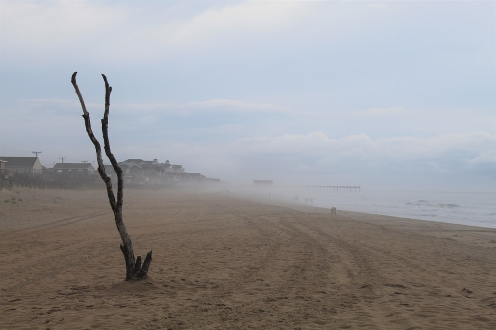 black and grey leafless tree trunk in brown sand beach