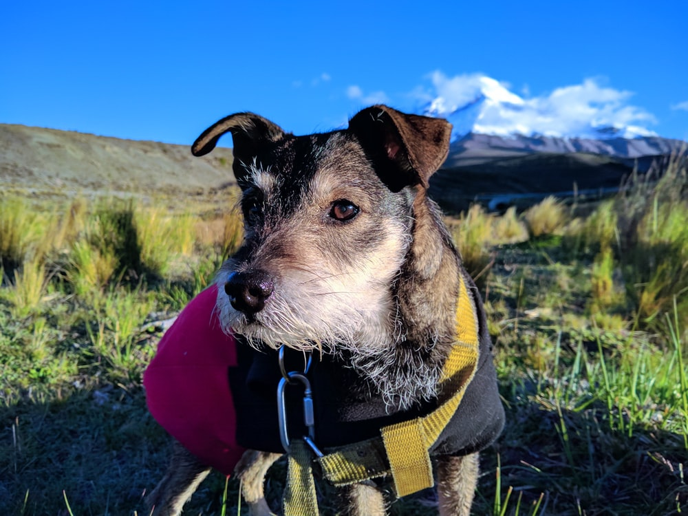 portrait photography of a dog wearing harness