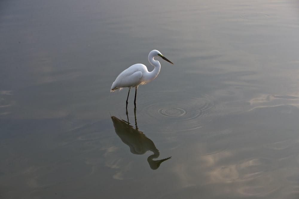 white stork standing on body of water