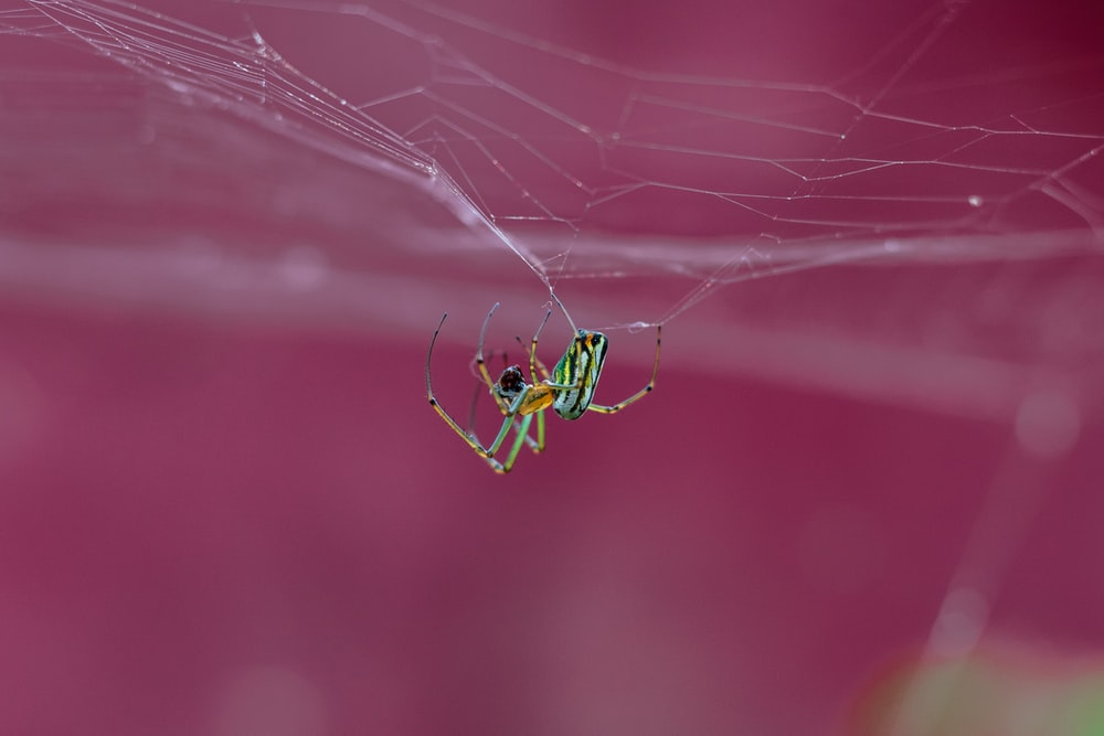 selective focus photo of green and brown spider
