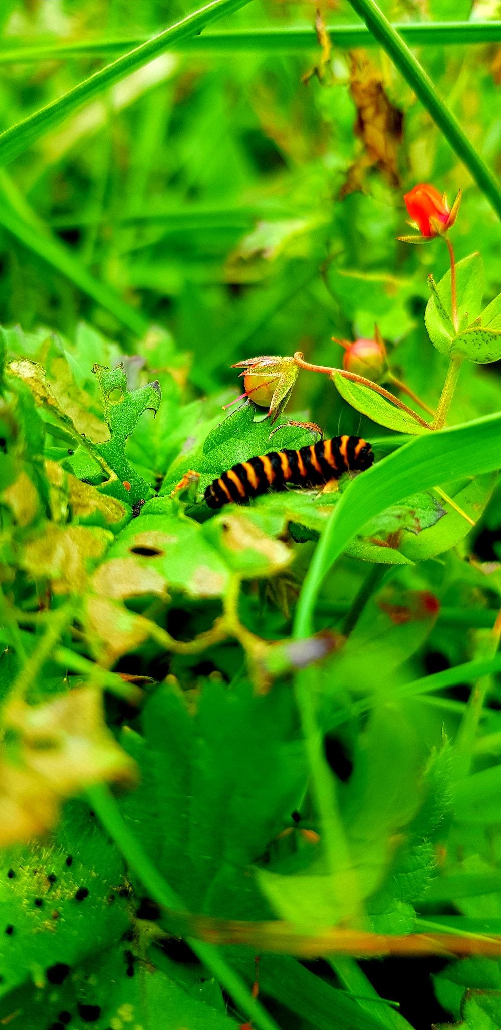 brown worm on leaf
