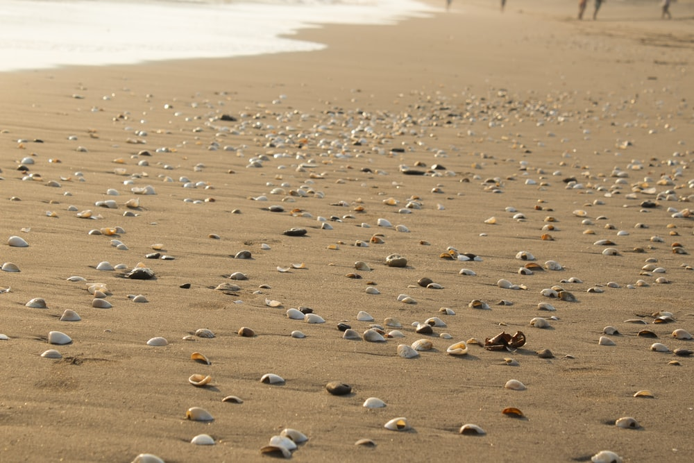 gray and brown rocks near seashore