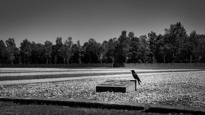 Crow on the site where it was the barrack 23 at the Dachau Concentration Camp.