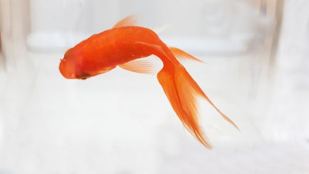 Dead Fish... :(