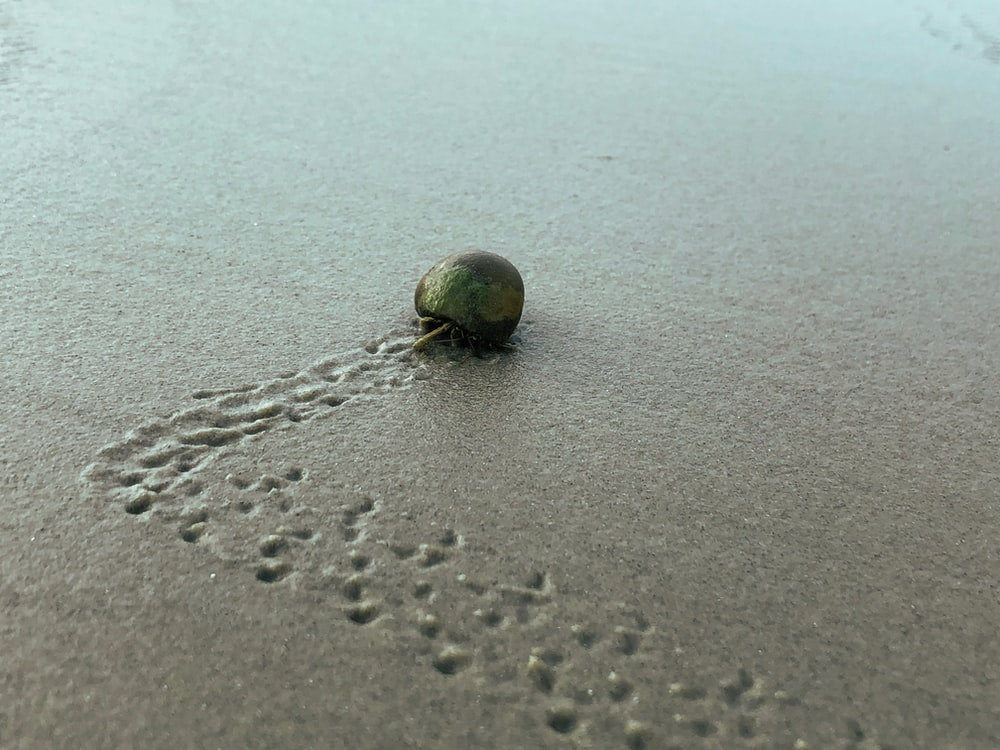 brown hermit crab on gray sand