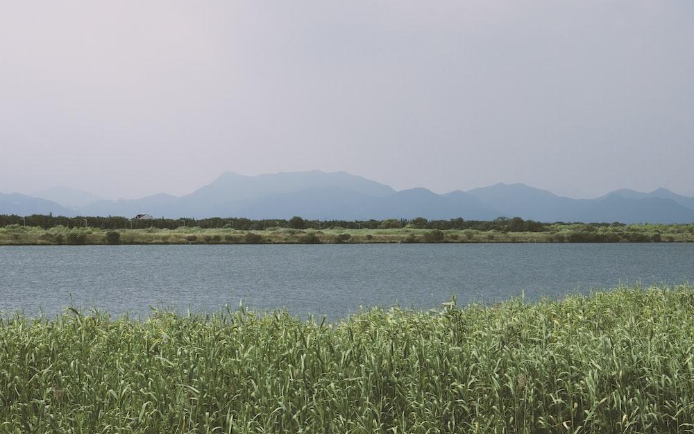 green grass near water