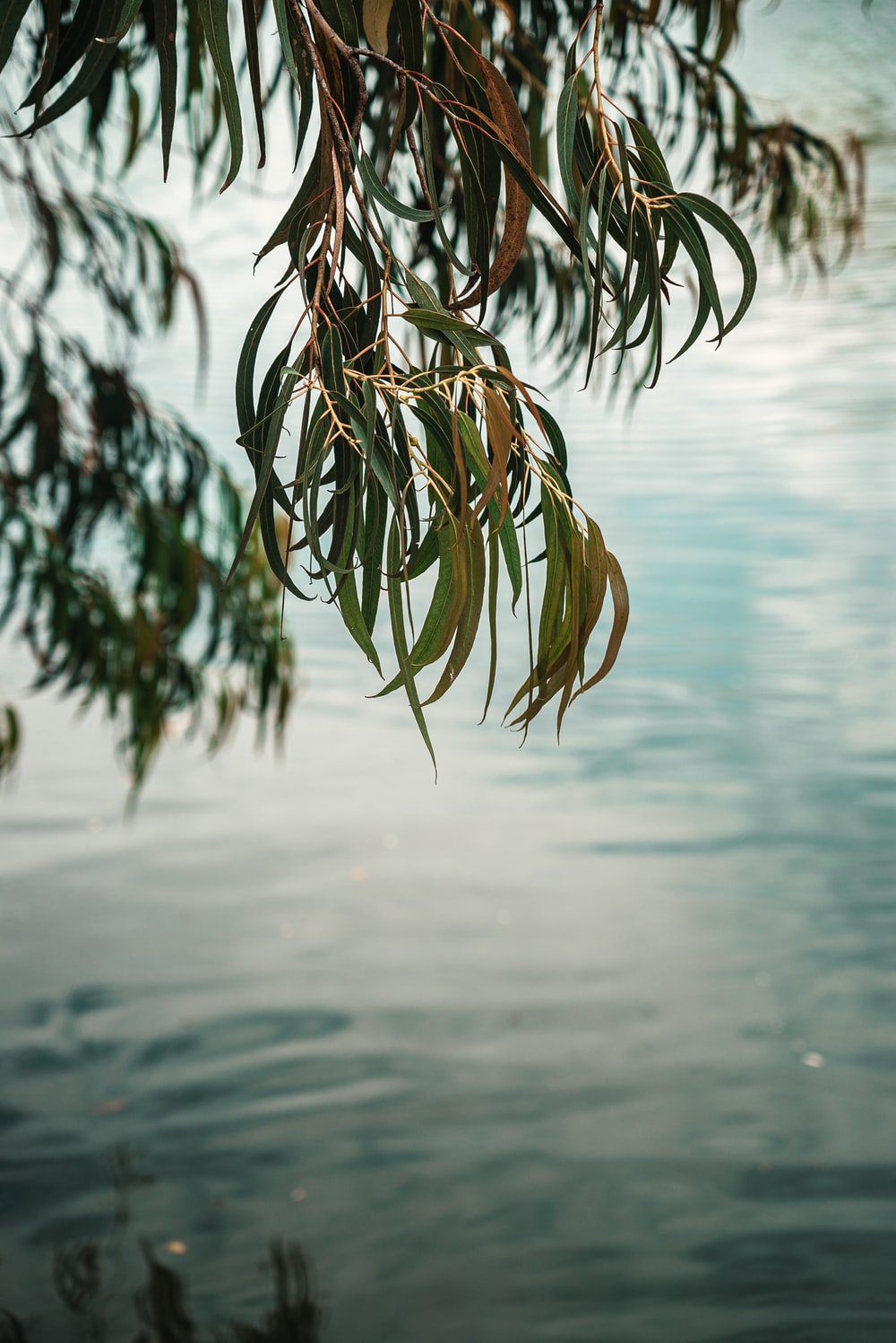 selective focus photo of green-leafed tree