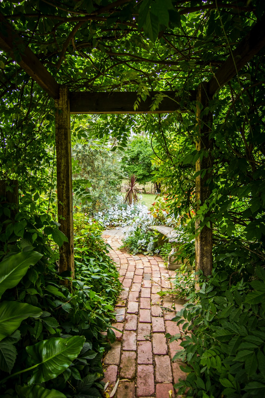 Green Leafed Plant-Tim Cooper