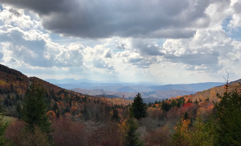 pine trees and mountains under white clouds