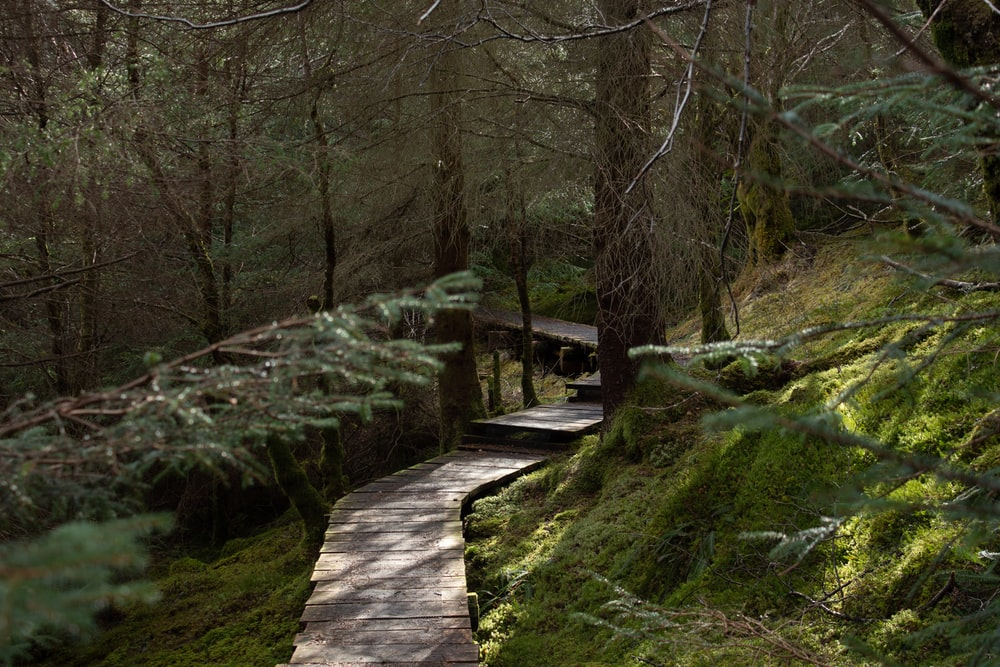 brown wooden walkway