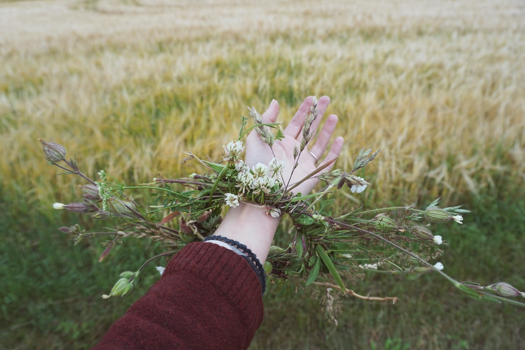 Hand with a wreath of wild flowers on the background of a wheat field.