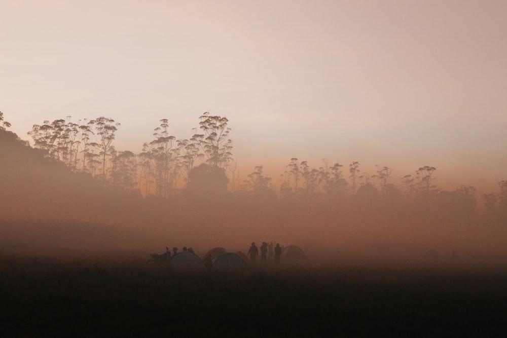 silhouette of people on field
