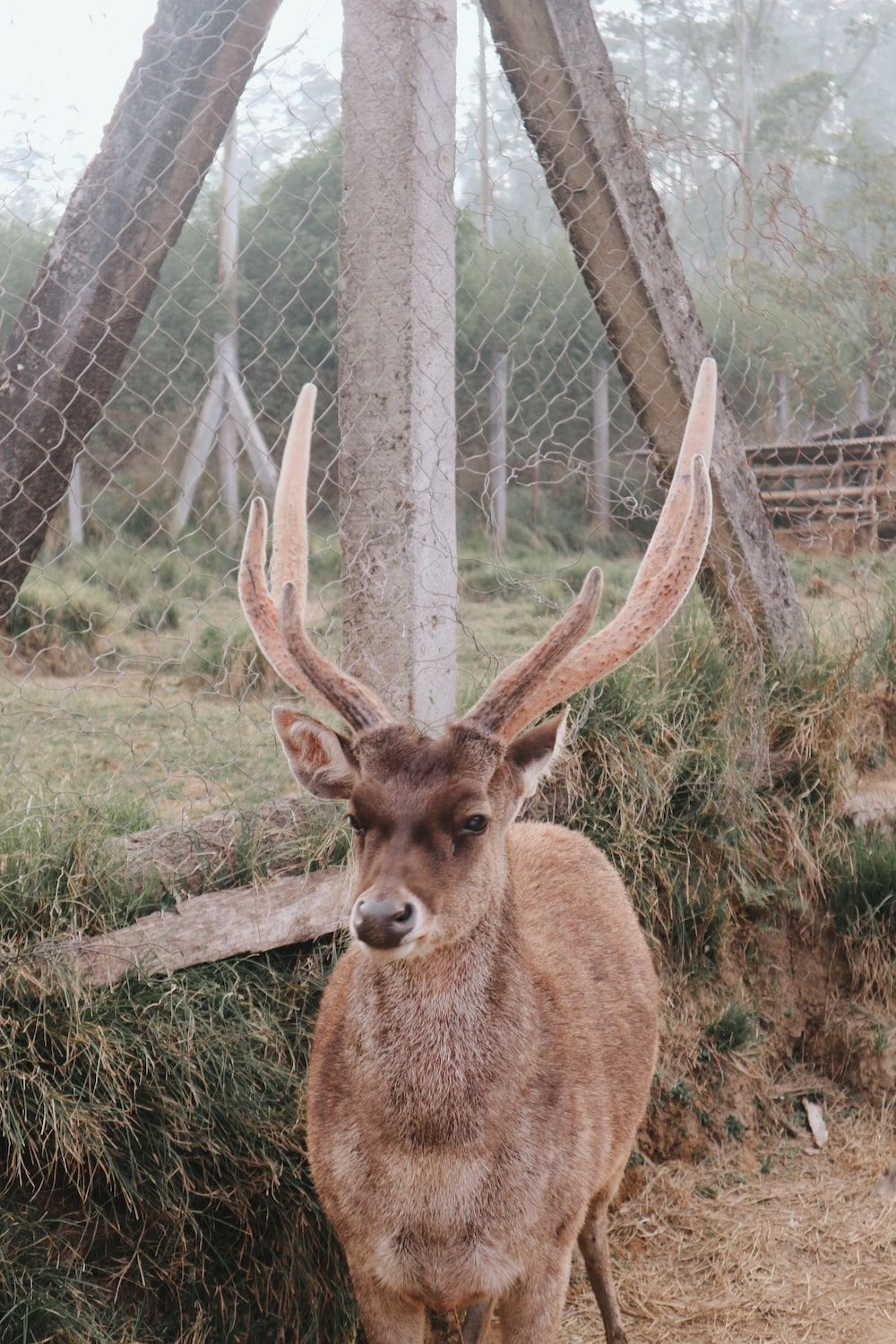 brown deer near chain link fence