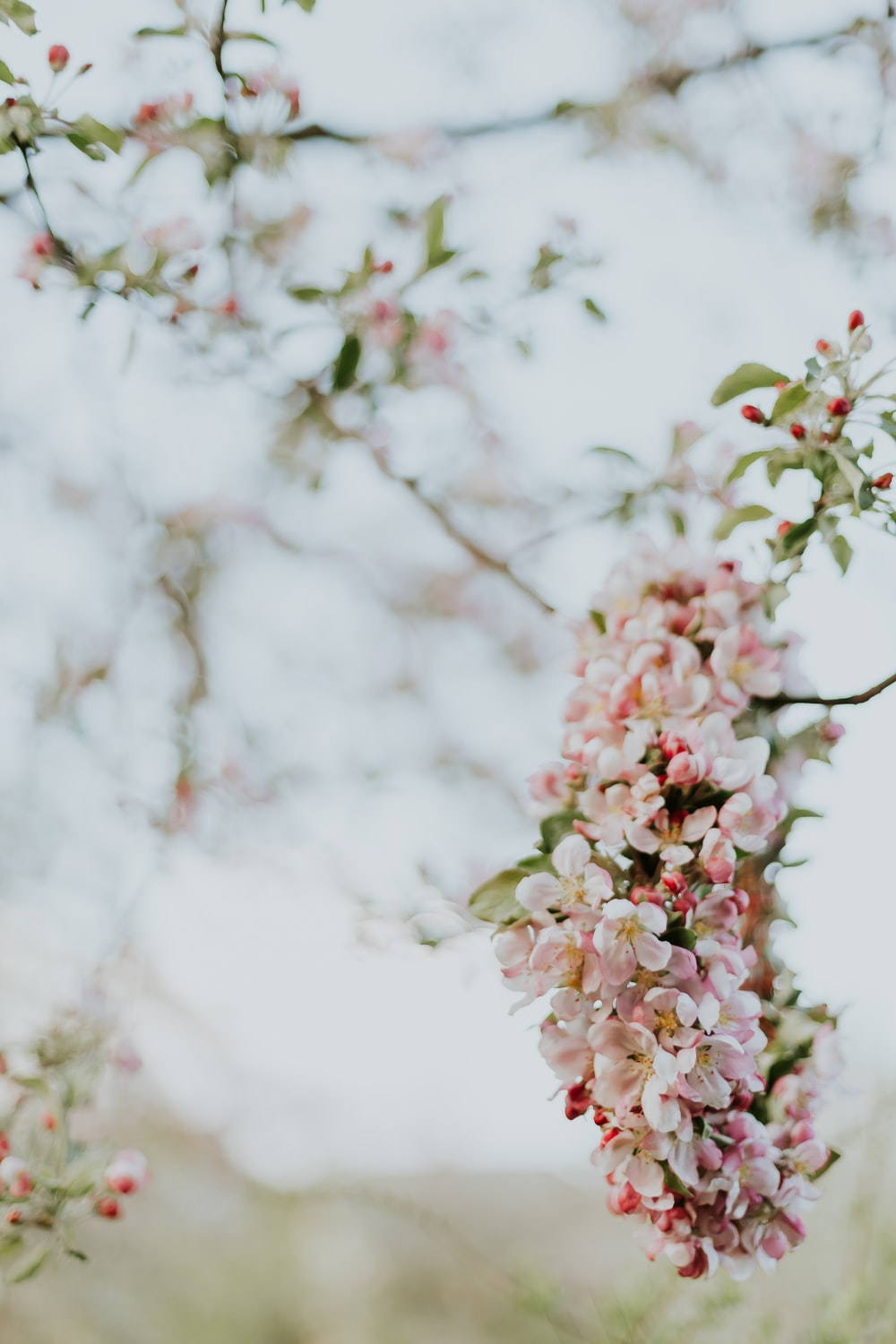 selective-focus photograph of cherry blossom