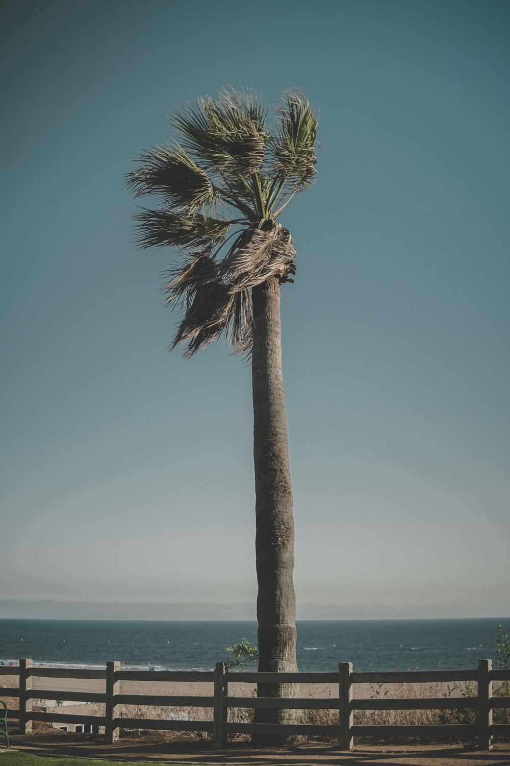 brown and green palm tree