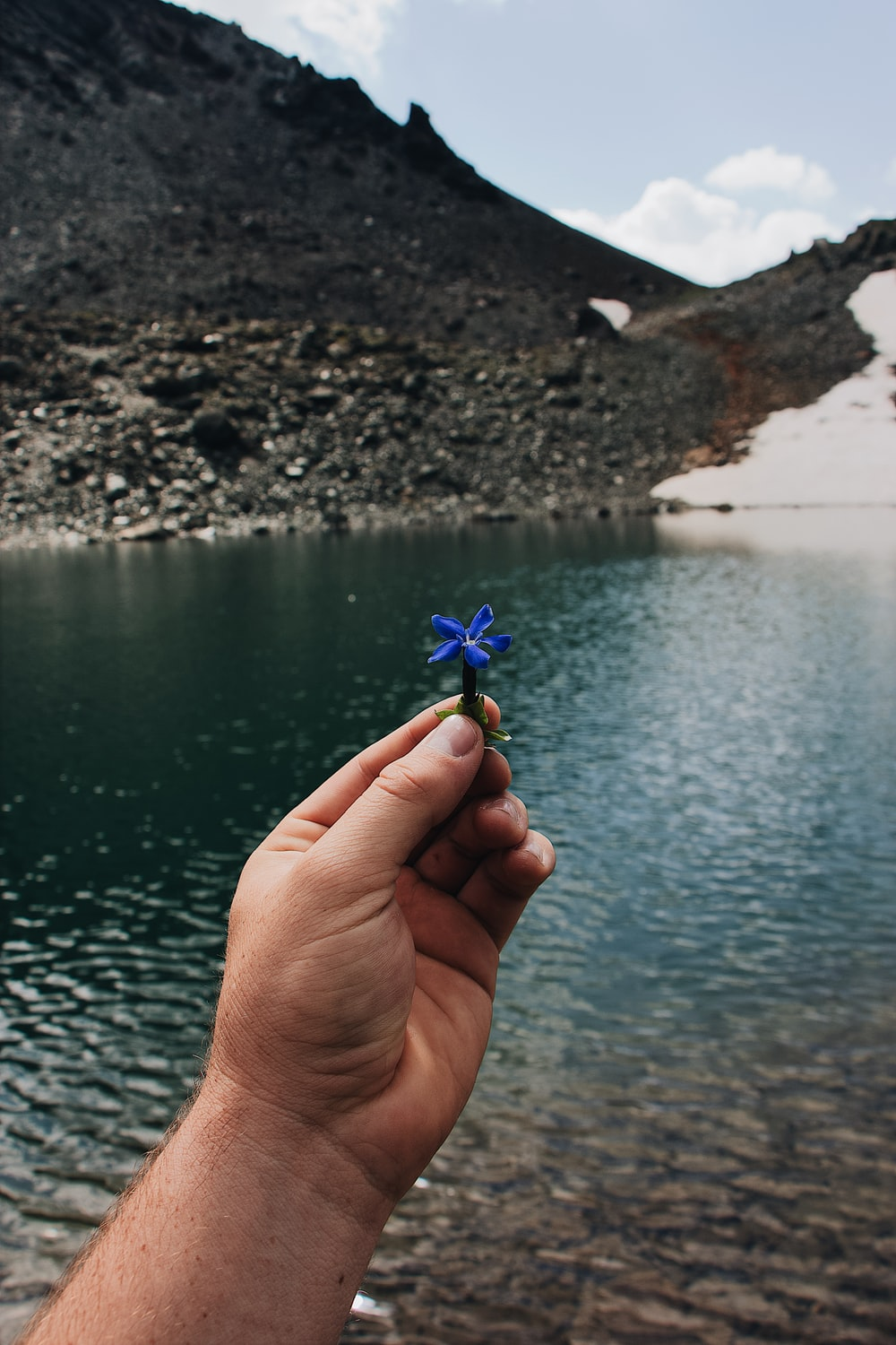person holding blue petaled flower close-up photography