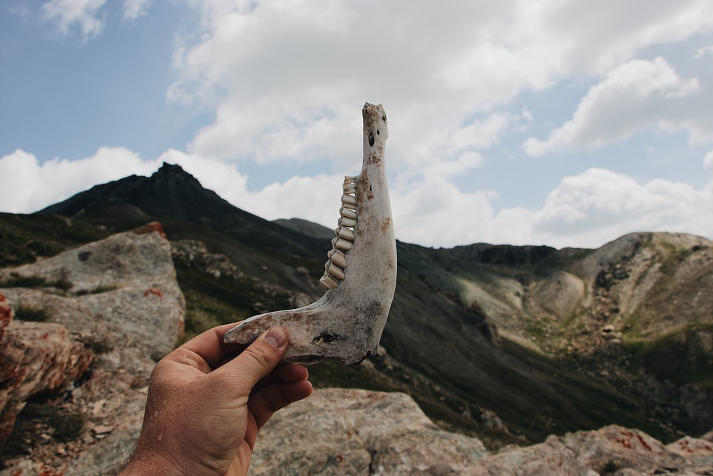 person holding skull fang