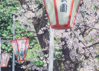 red and clear pendant lamp beside blossom tree