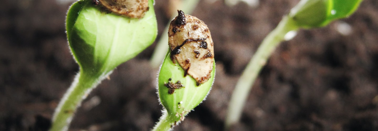 Aphid Pest Control Beating These Pests in Your Garden