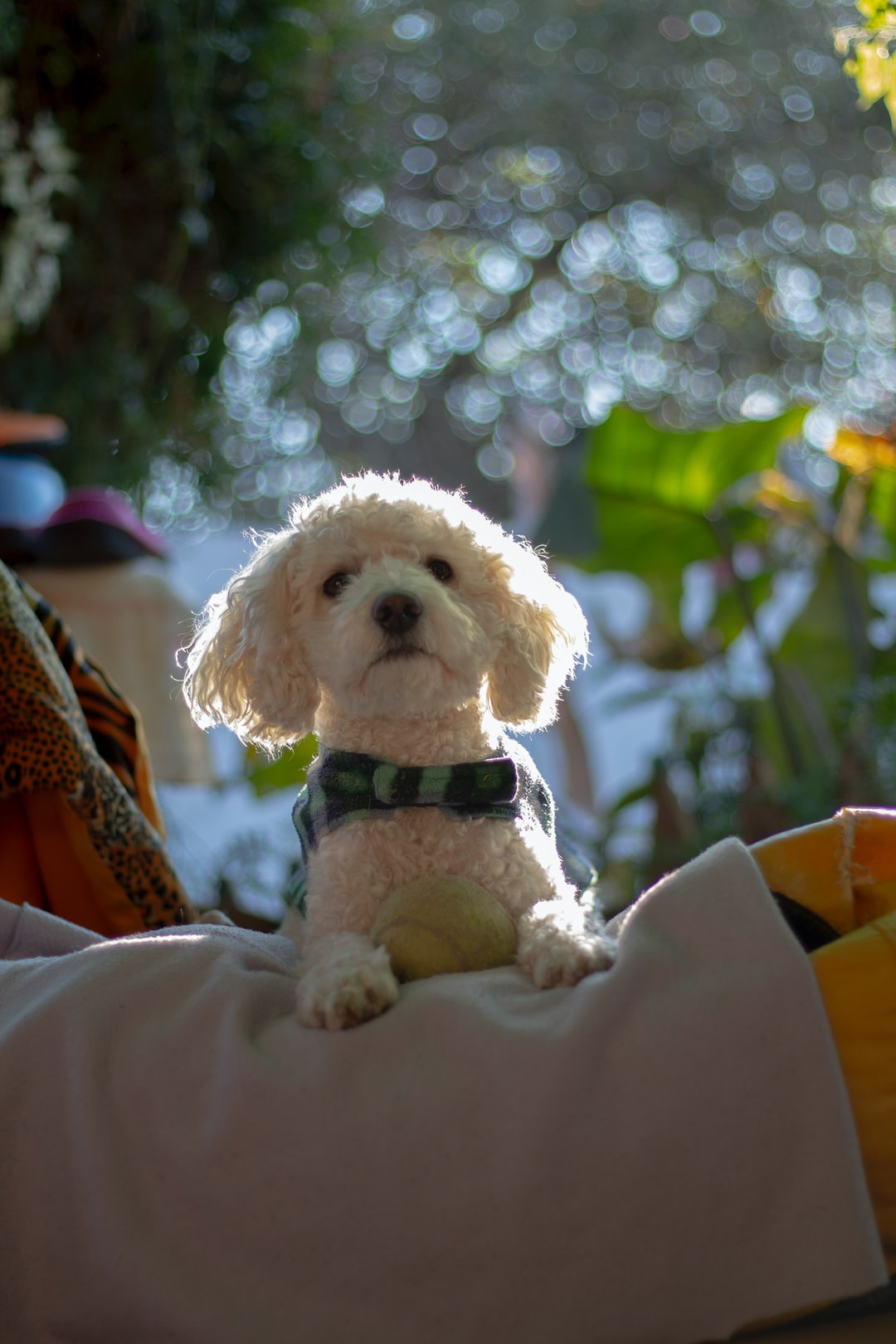 3 ways DNA tests will level up your pet parenting