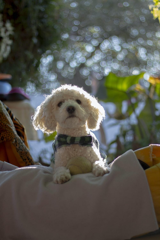 long-coat white dog on grey textile