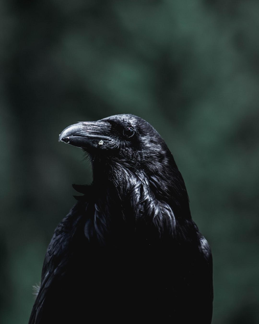 Edgar Allen Poe would like a word.