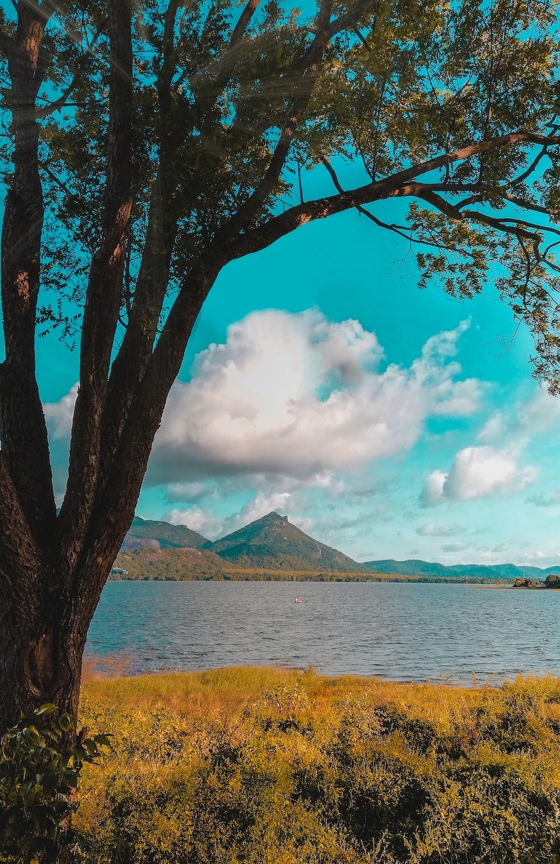 tree beside body of water