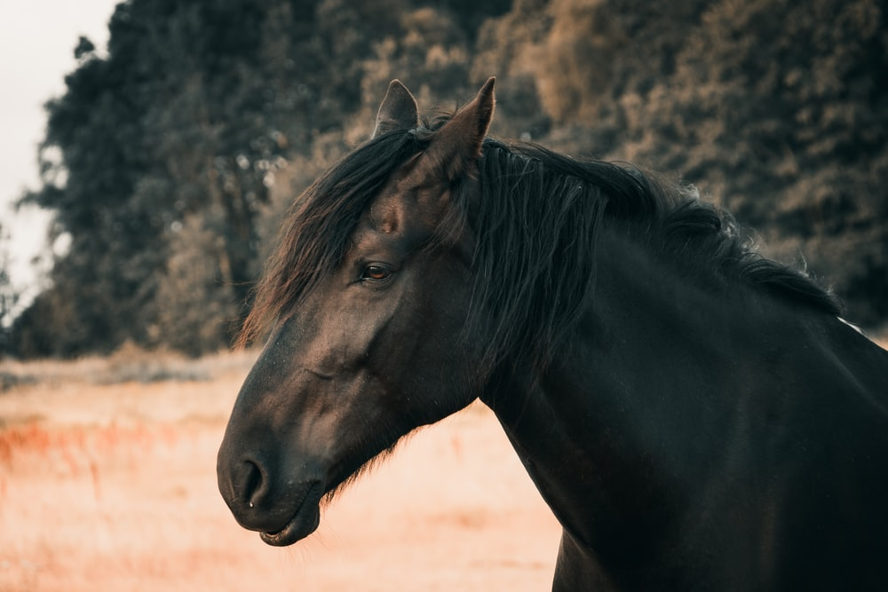 500 Black Horse Pictures Hd Download Free Images On Unsplash
