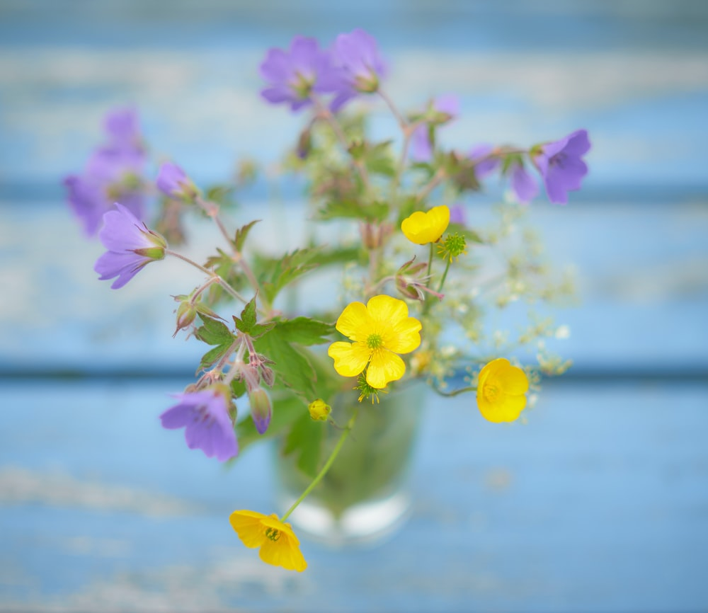 yellow and purple flowers with green leaves macro photography