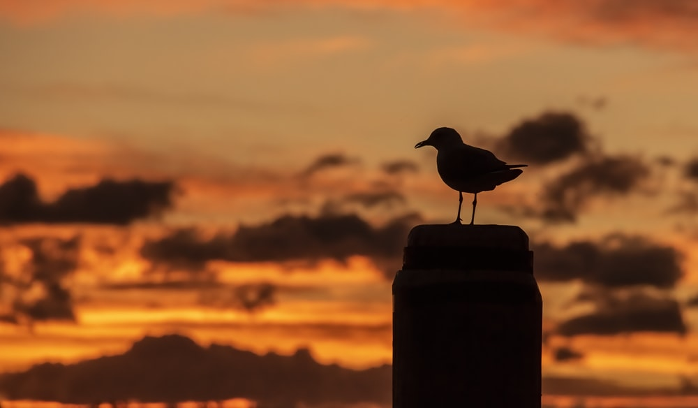 bird perched on post during golden hour