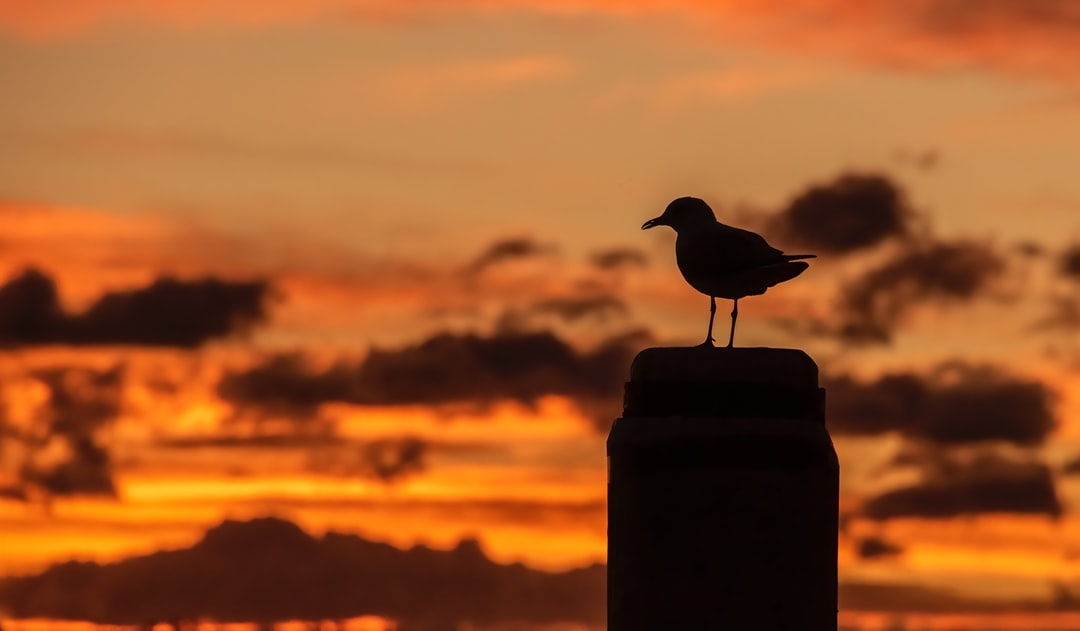 A seagull admires the start of a new day.