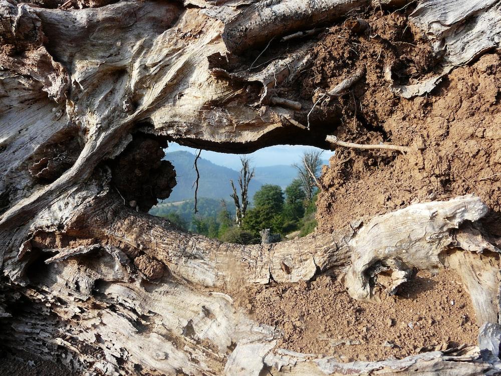 brown tree root photo