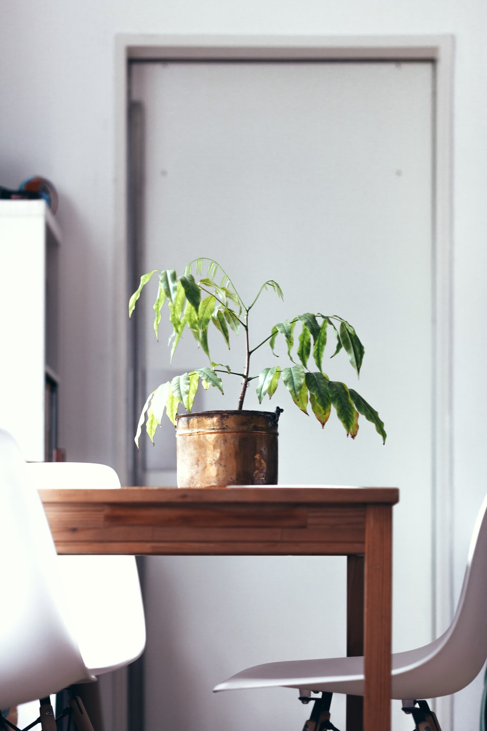 green leaf plant in pot on wooden table