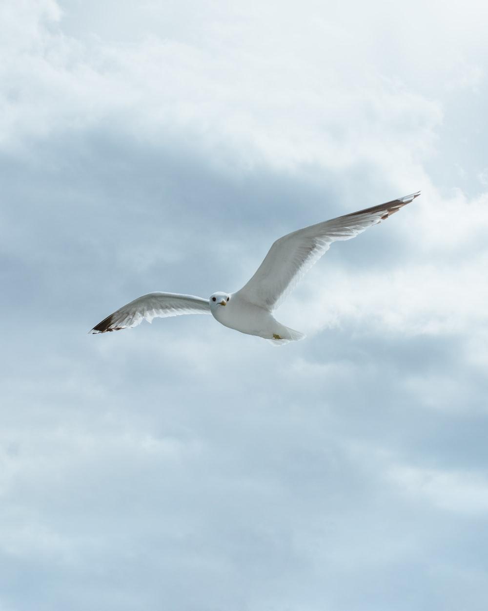 white bird in sky during daytime
