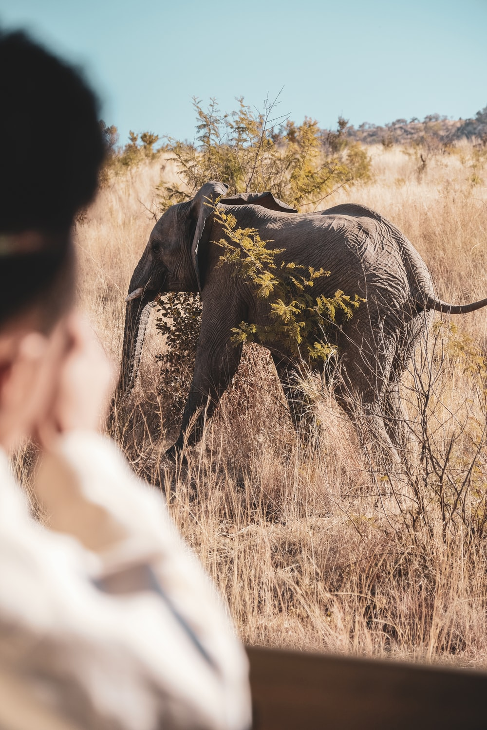 gray elephant surrounded by plants