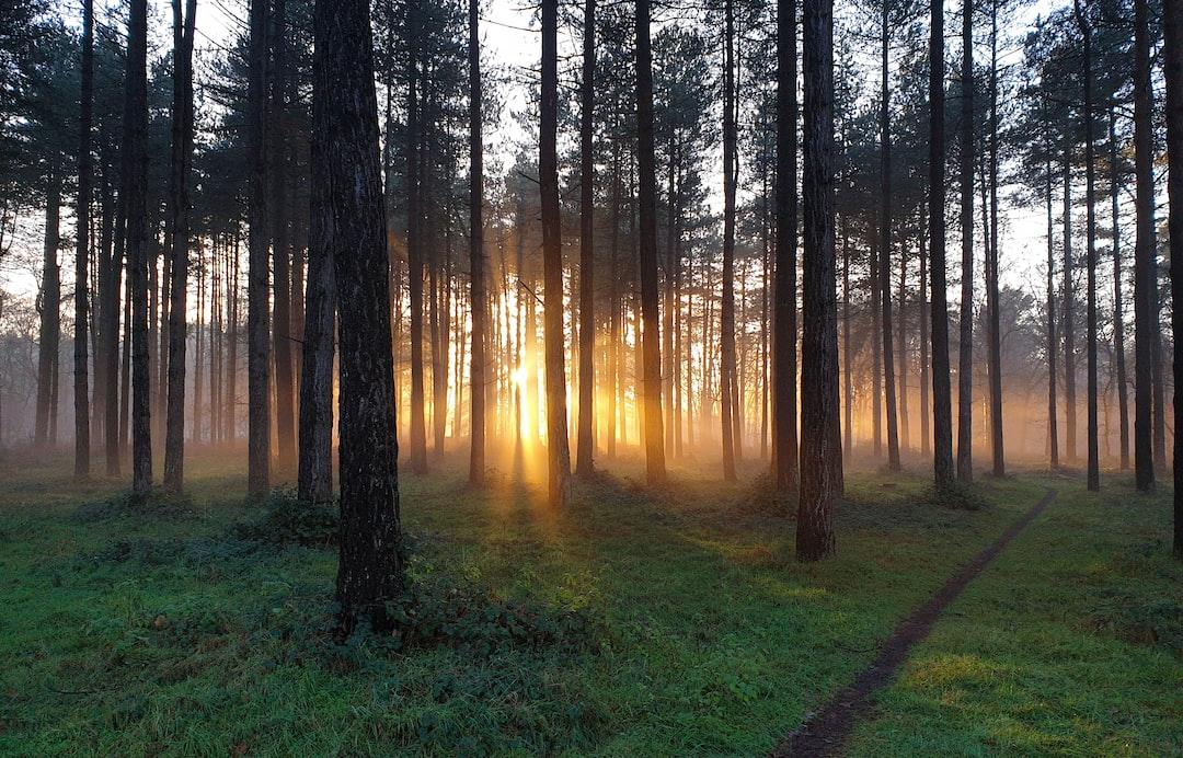 Thetford Forest / Park