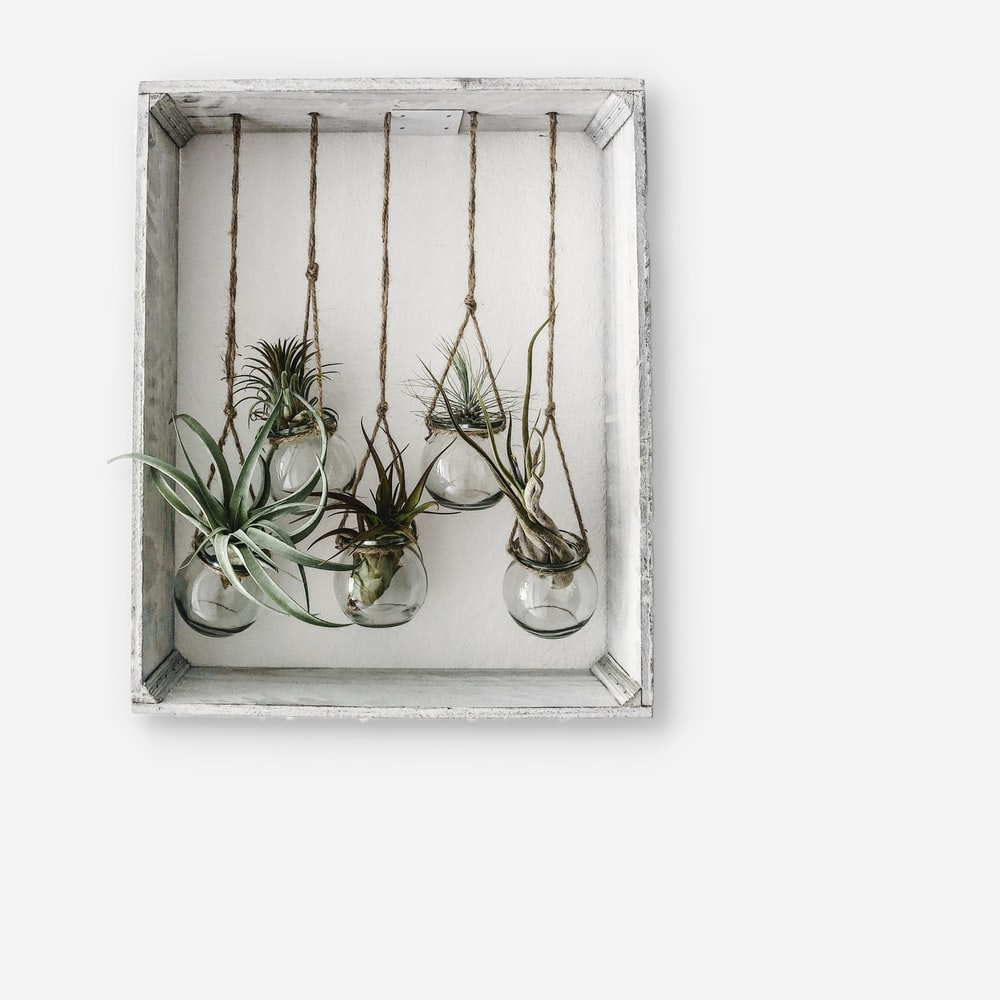 five plants hanging on white shelf
