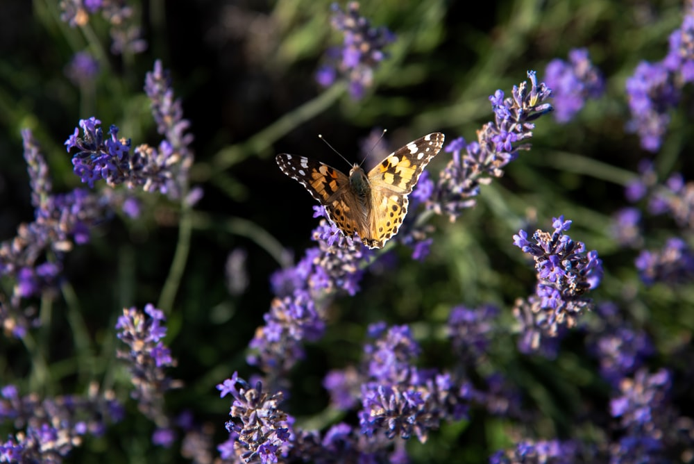 yellow butterfly in a purple flower plant close-up photography
