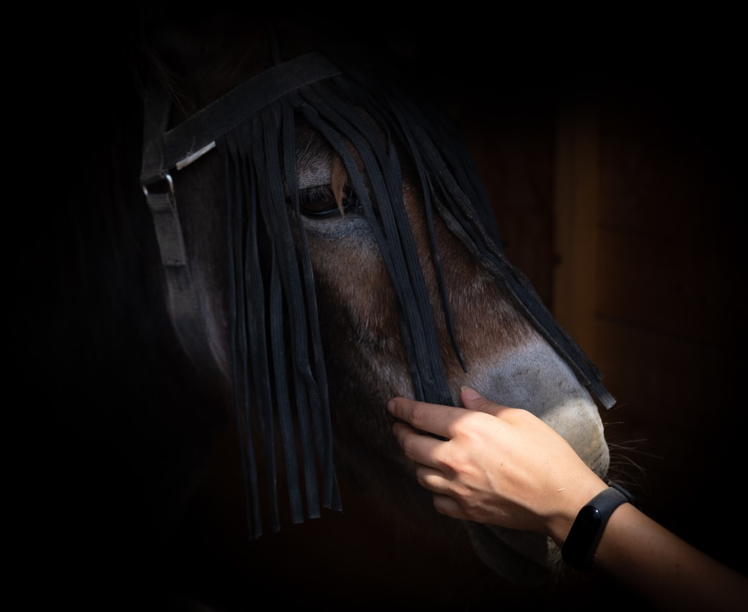 A horse connecting with a human in Corazón Verde, a sanctuary for rescued animals in Spain.