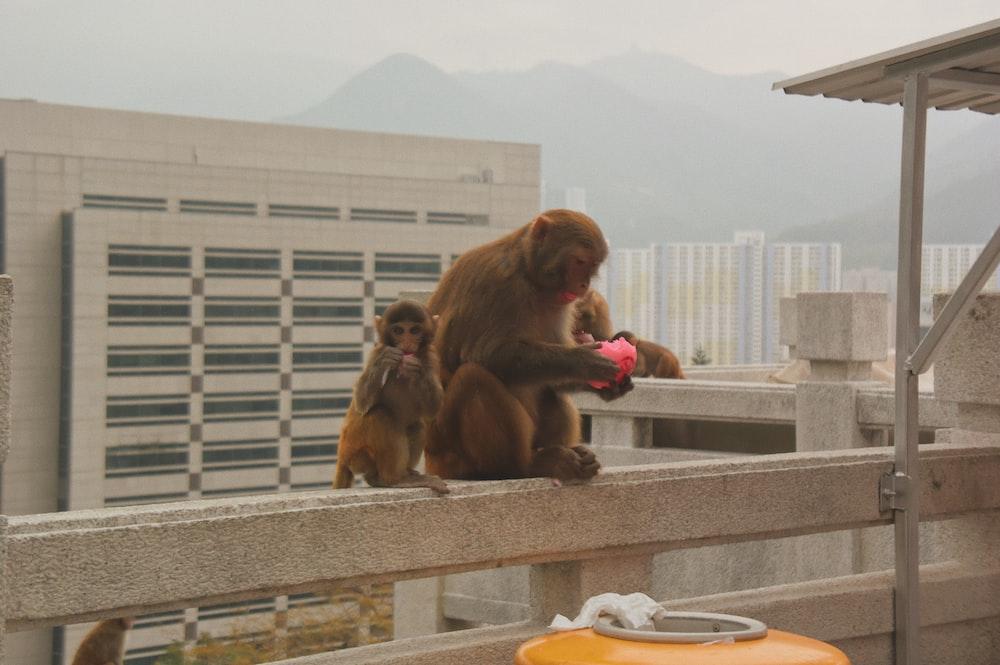 two monkeys sitting on terrace